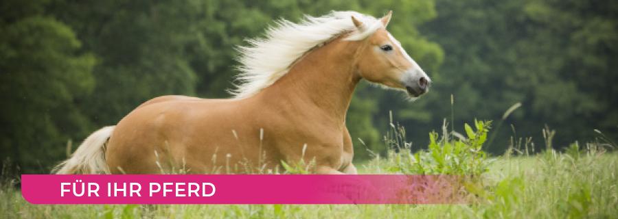 Unterseiten_Pferd-900x320px